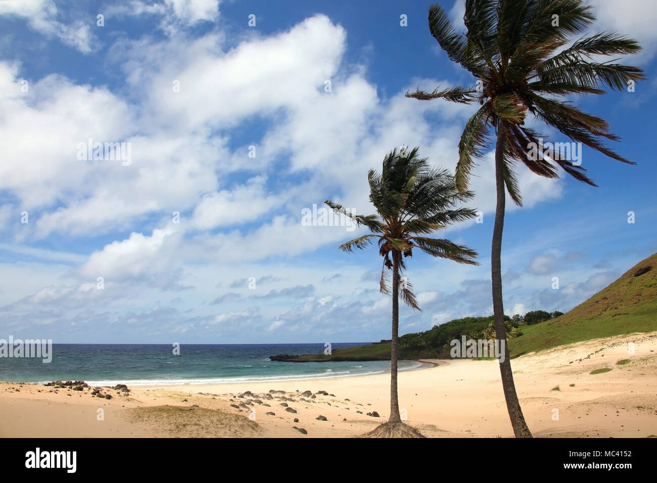 Beautiful Anakena Beach, with golden sand & tropical palm trees, Easter Island, Chile. - Stock Image