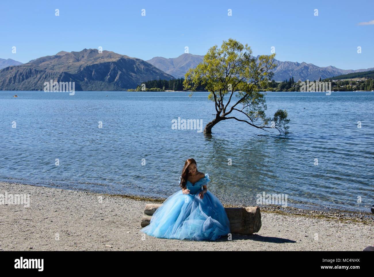 The famed Wanaka Tree, Lake Wanaka, New Zealand Stock Photo - Alamy