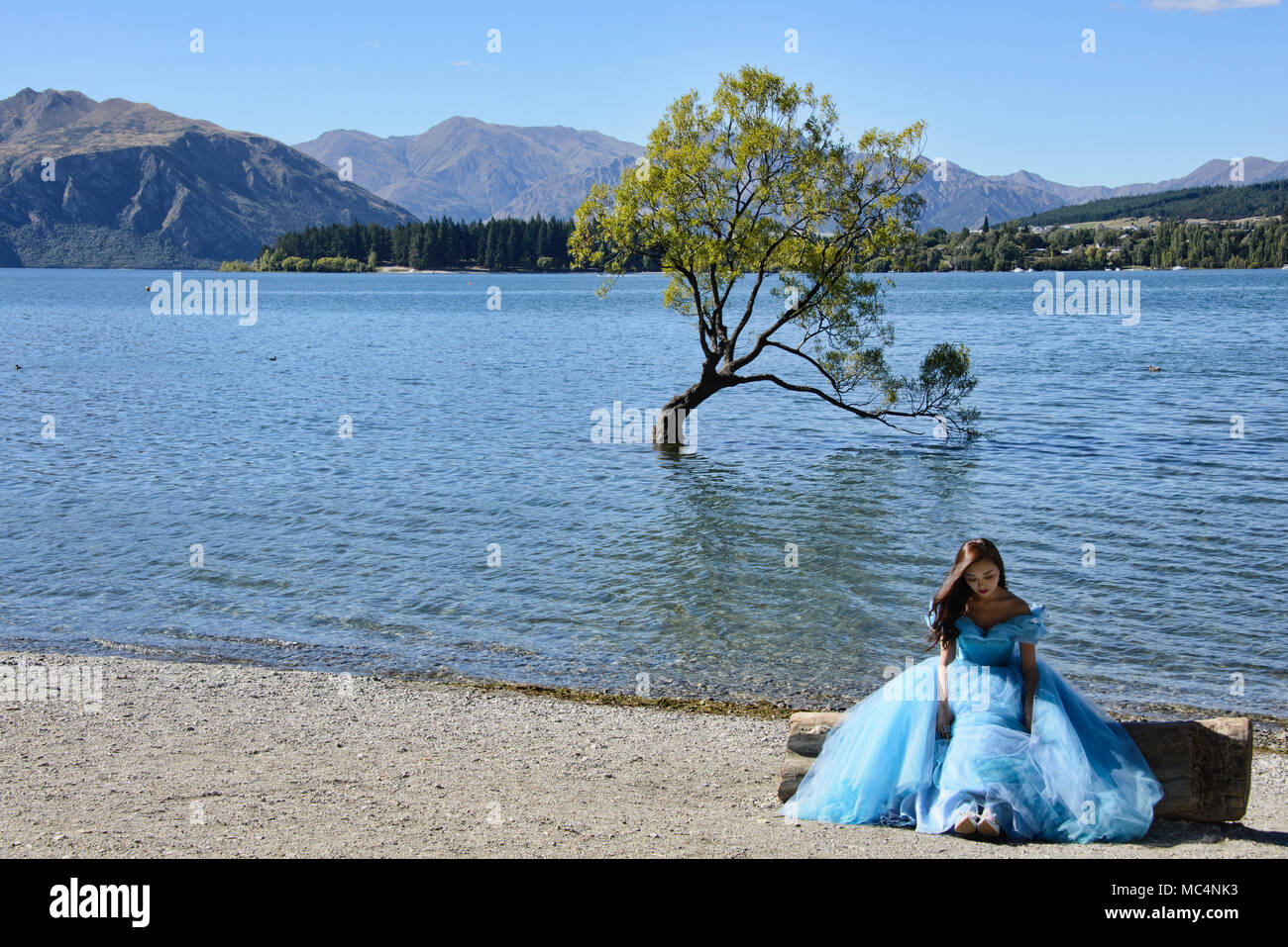 The famed Wanaka Tree, Lake Wanaka, New Zealand Stock Photo