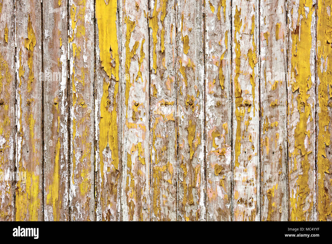 The old wooden wall painted with yellow color cracking, peeling and ...