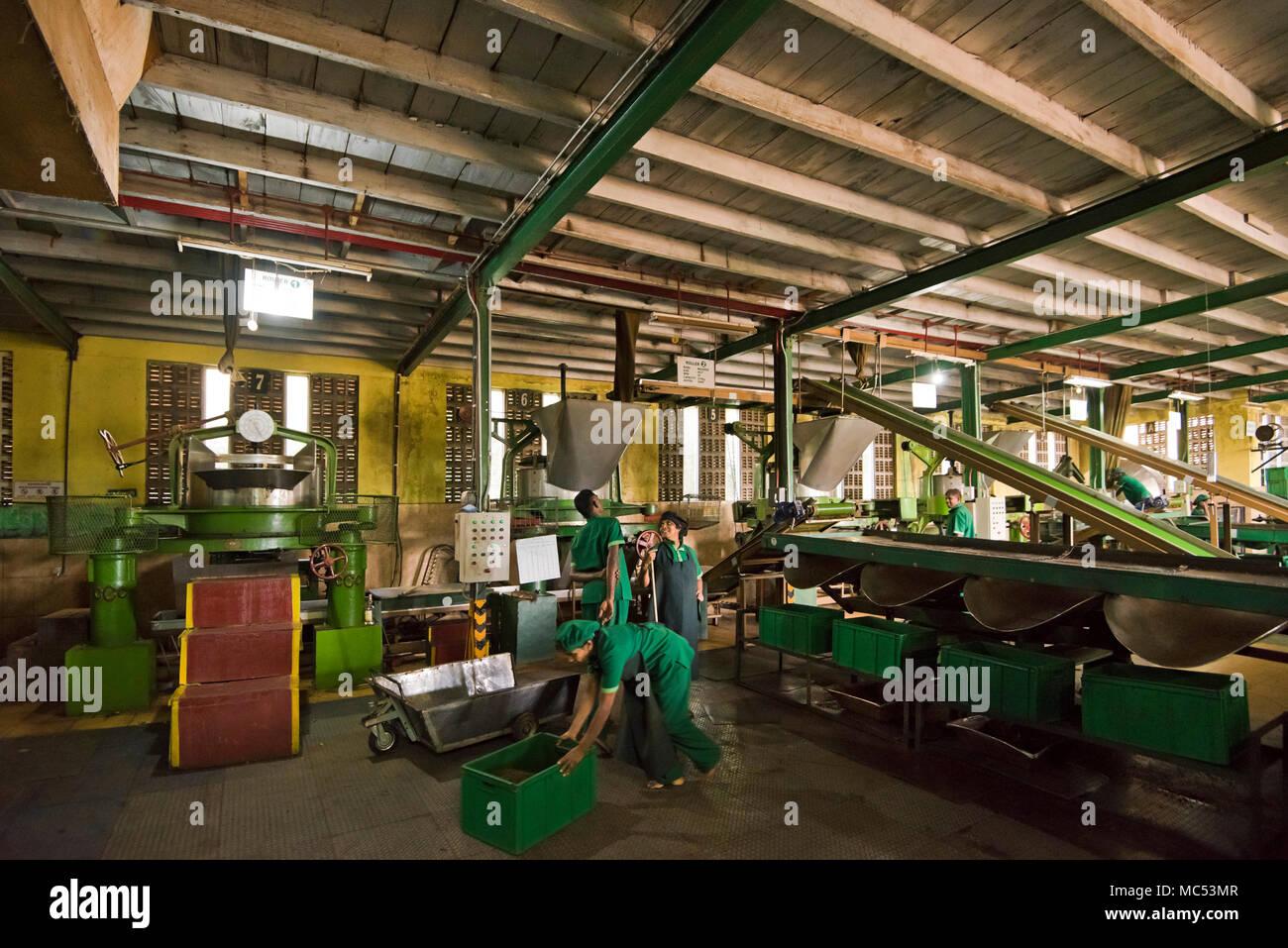 Horizontal view of tea plantation workers at Nuwaraeliya in Sri Lanka. Stock Photo
