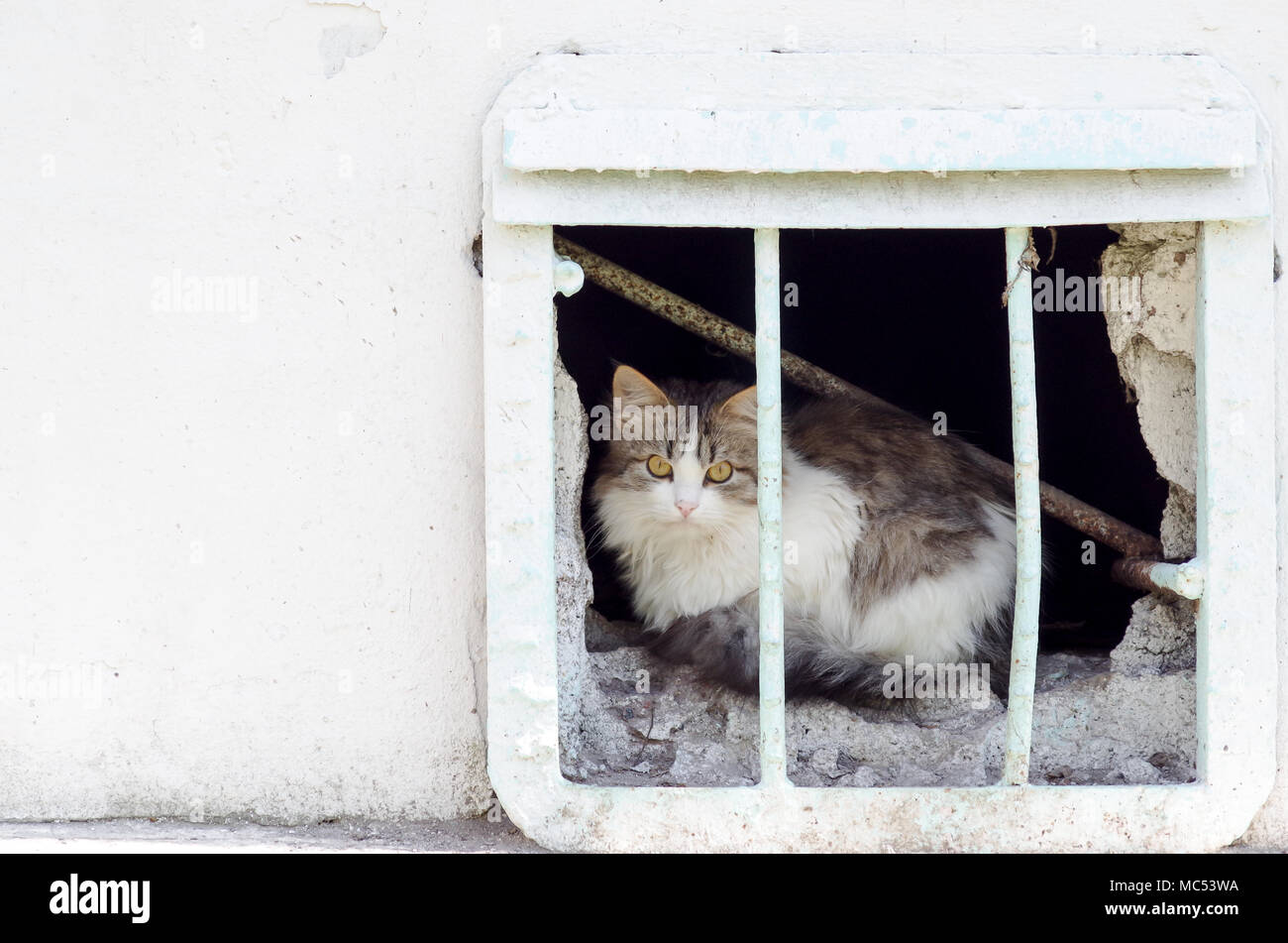 Homeless cat from the window of the basement observes the street - Stock Image