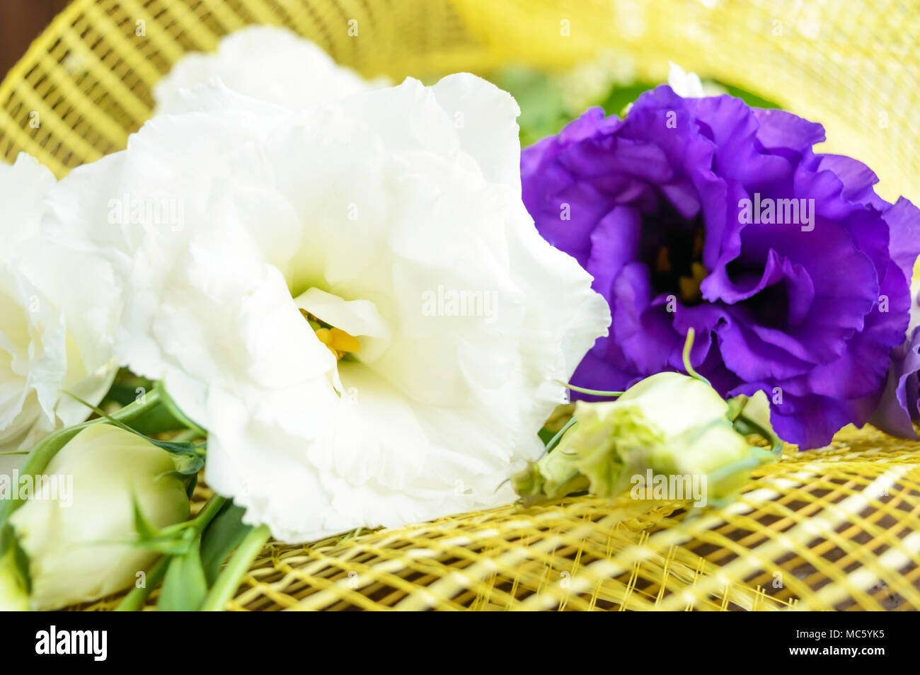 Freshly picked white and purple flowers eustomy (lisianthus)  on the wooden background. Close up - Stock Image