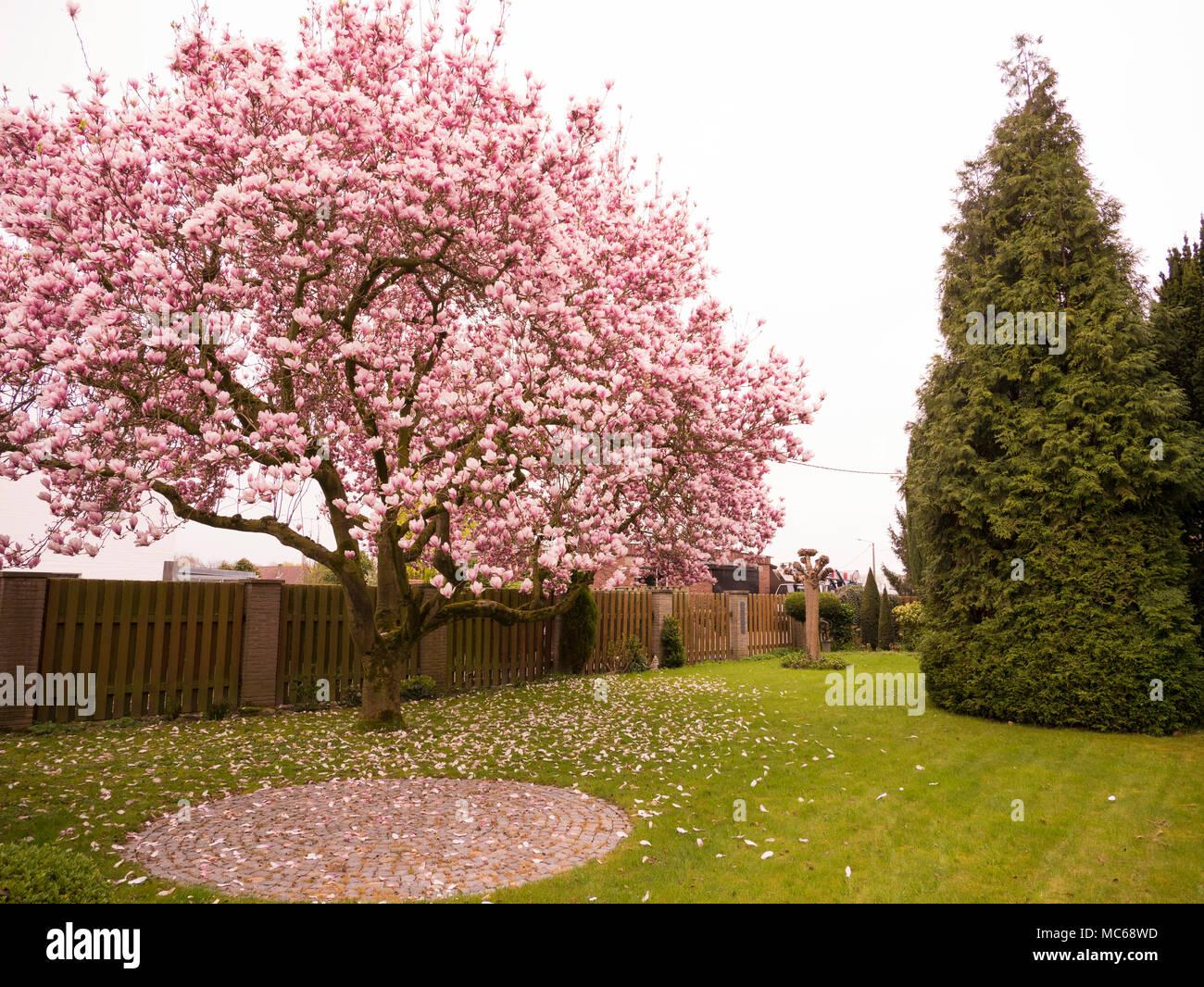 Pink Tree - Stock Image
