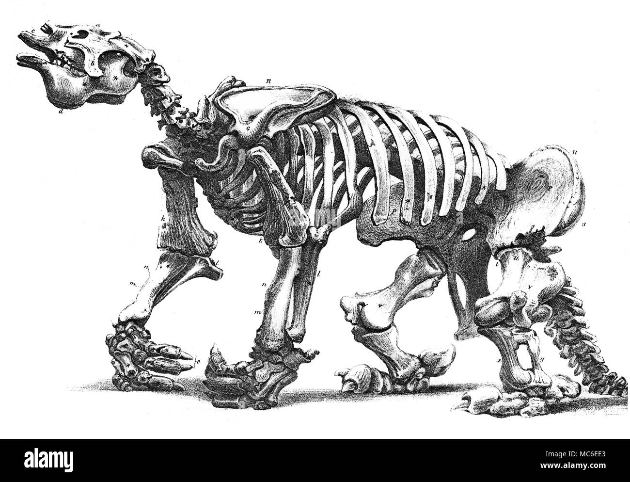 MONSTERS  Lithograph (by W.L. Walton) of the skeleton of a Megatherium, preserved in the Royal College of Surgeons, after a drawing by Waterhouse Hawkins. Fold-out plate, from Francis T. Buckland, Geology and Mineralogy, 1858. - Stock Image