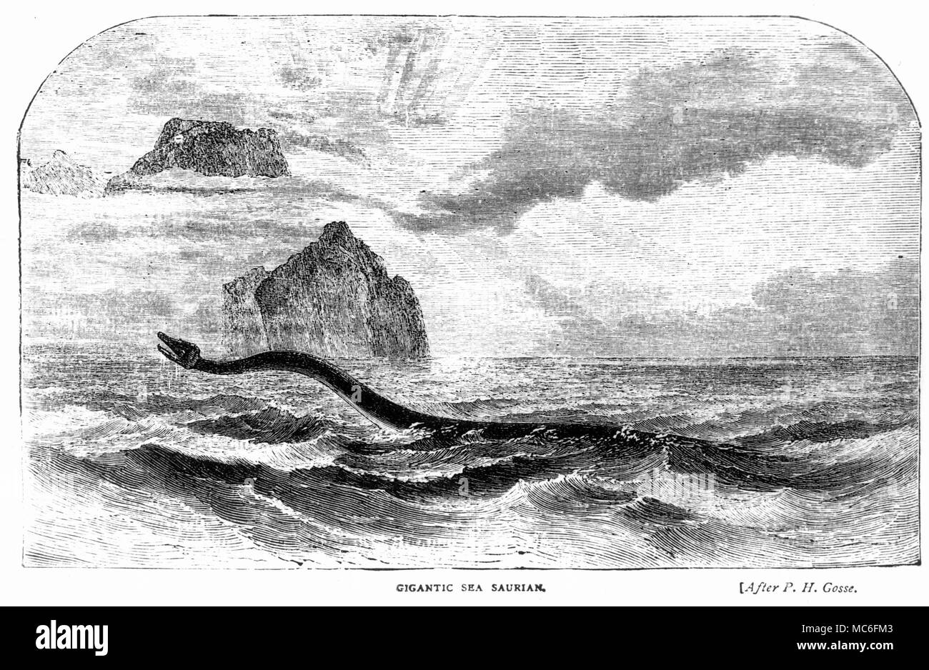 'Gigantic Sea Surian' - woodengraving of sea-monster, after the famous print used to illustrate Gosse's natural history. - Stock Image