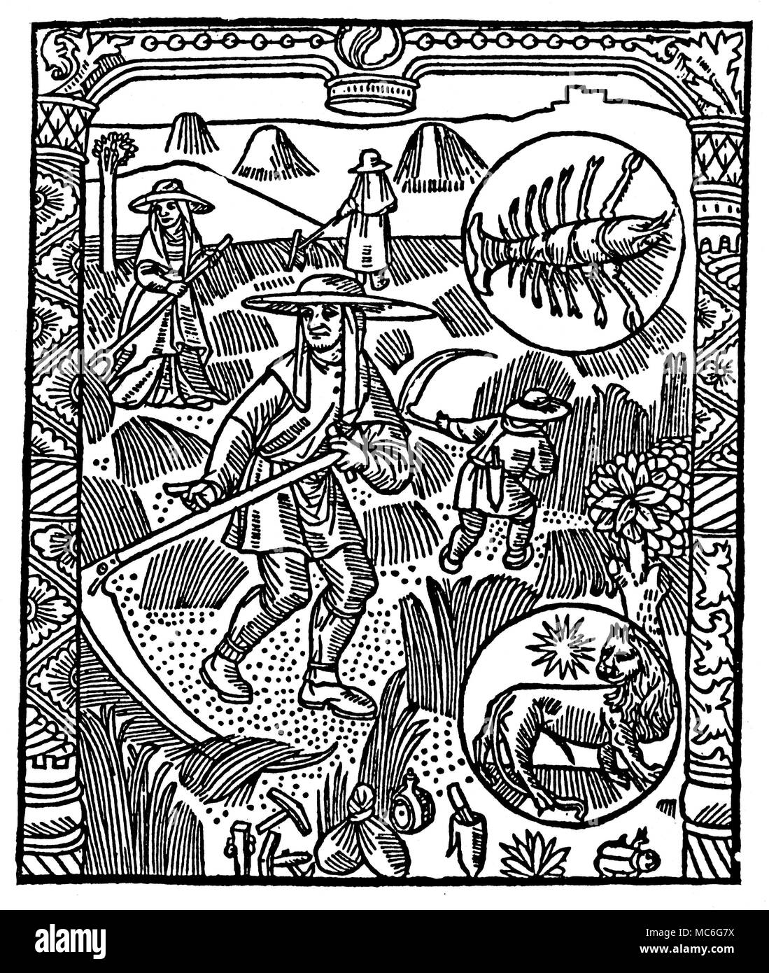 MONTHS - JULY - CANCER & LEO Woodcut depicting cutting grass, and hay making.   The top roundel is the zodiac image for Cancer the Crab, here represented in the form of a crayfish much favoured by the mediaeval astrologers;  the bottom roundel represents Leo the Lion.  From Le Grant Kalendrier & compost des Bergiers avecq leur Astrologie, circa 1500. - Stock Image