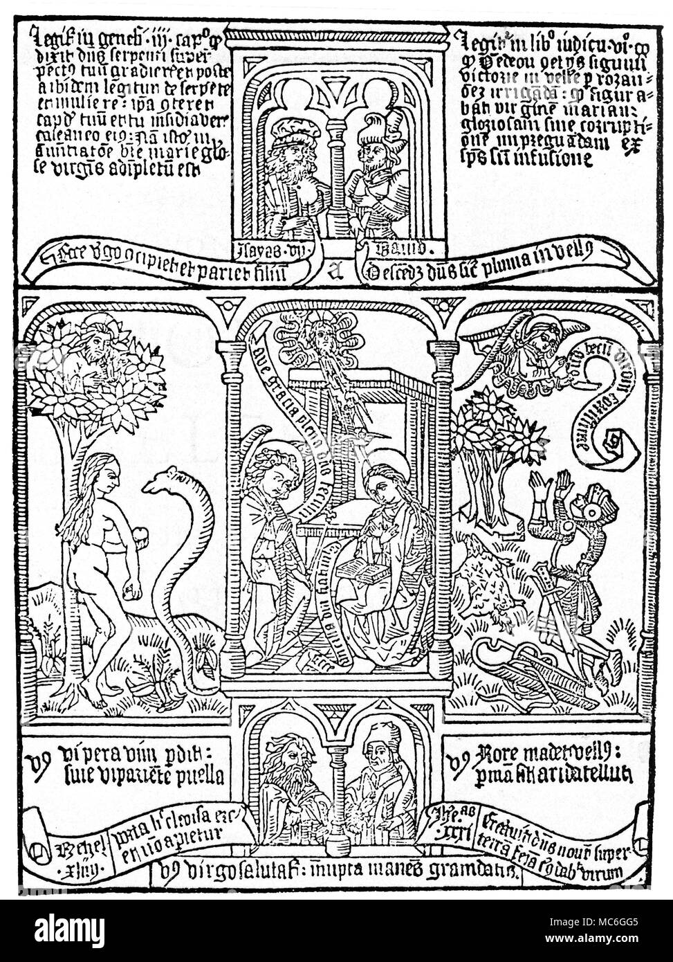 Symbols Serpent Golden Fleece Woodcut From A Late Fifteenth