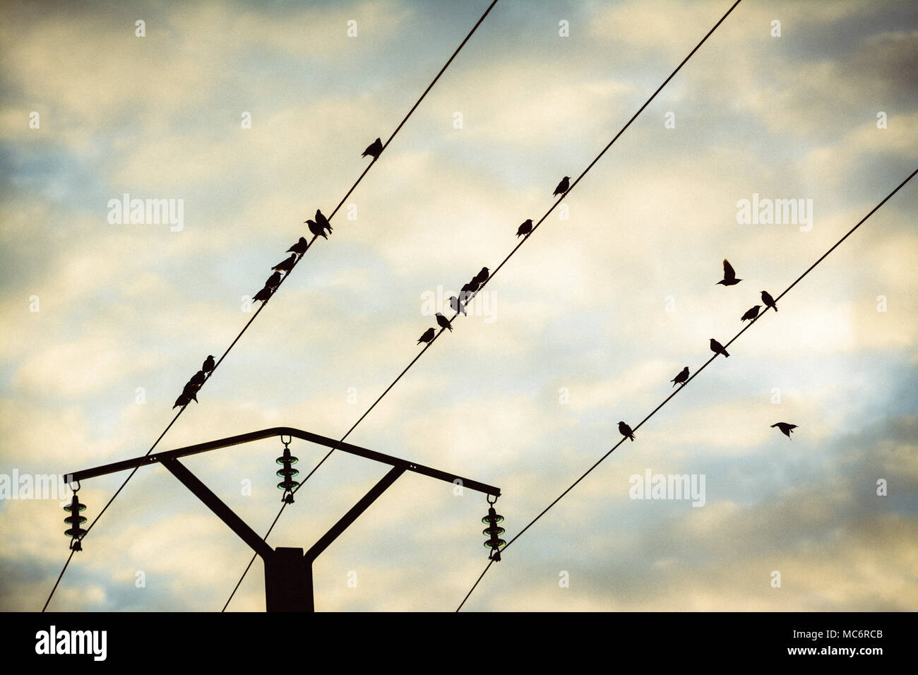 Birds on a telephone pole wire, Puy de Dome, Auvergne, France, Europe - Stock Image