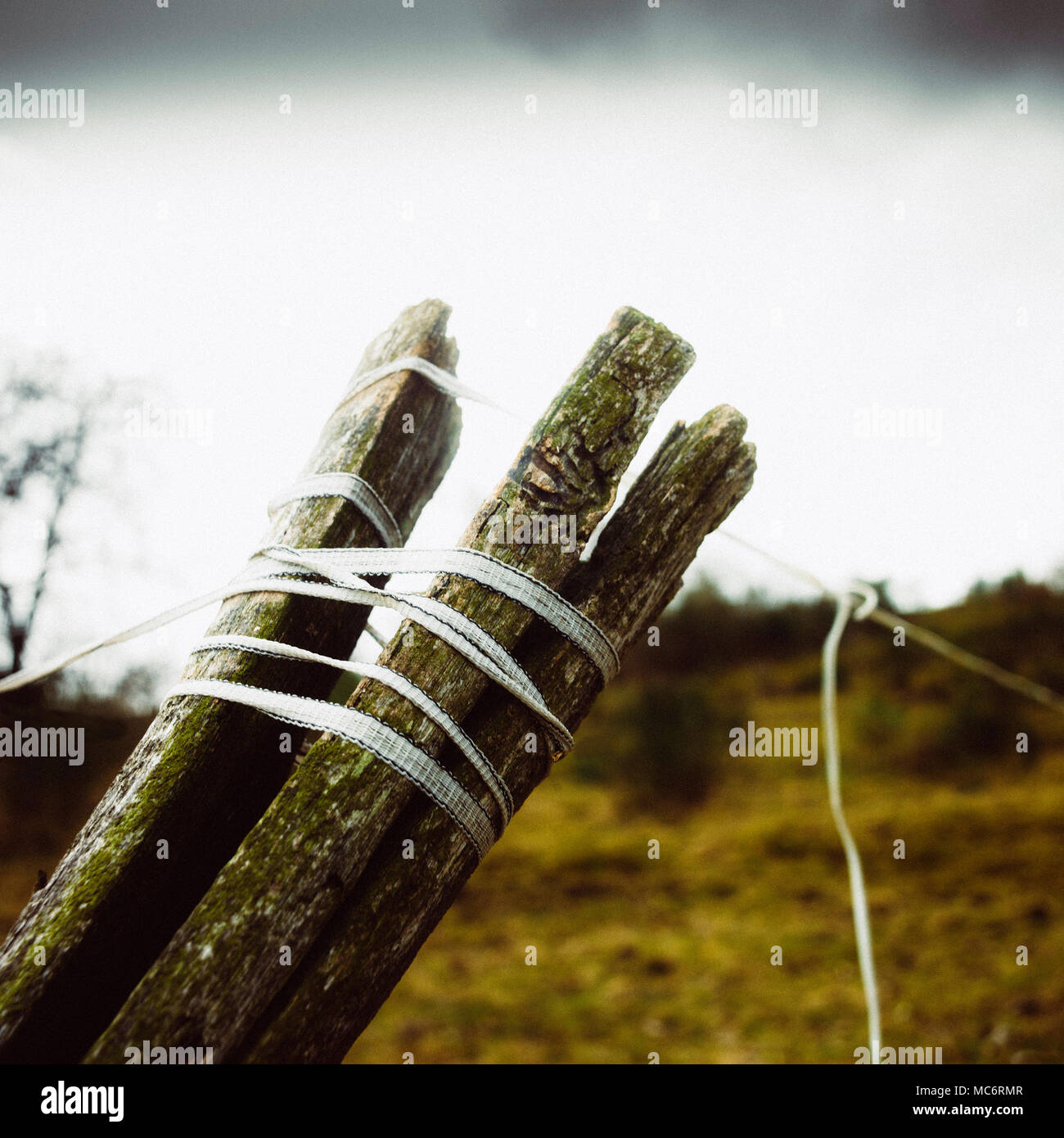 Close up of a fence post in winter. Auvergne. France - Stock Image
