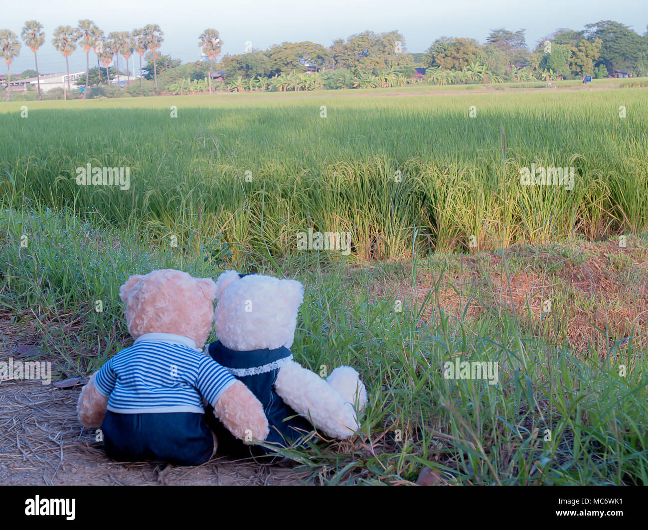 Teddy bear in love , The two people who live together. - Stock Image
