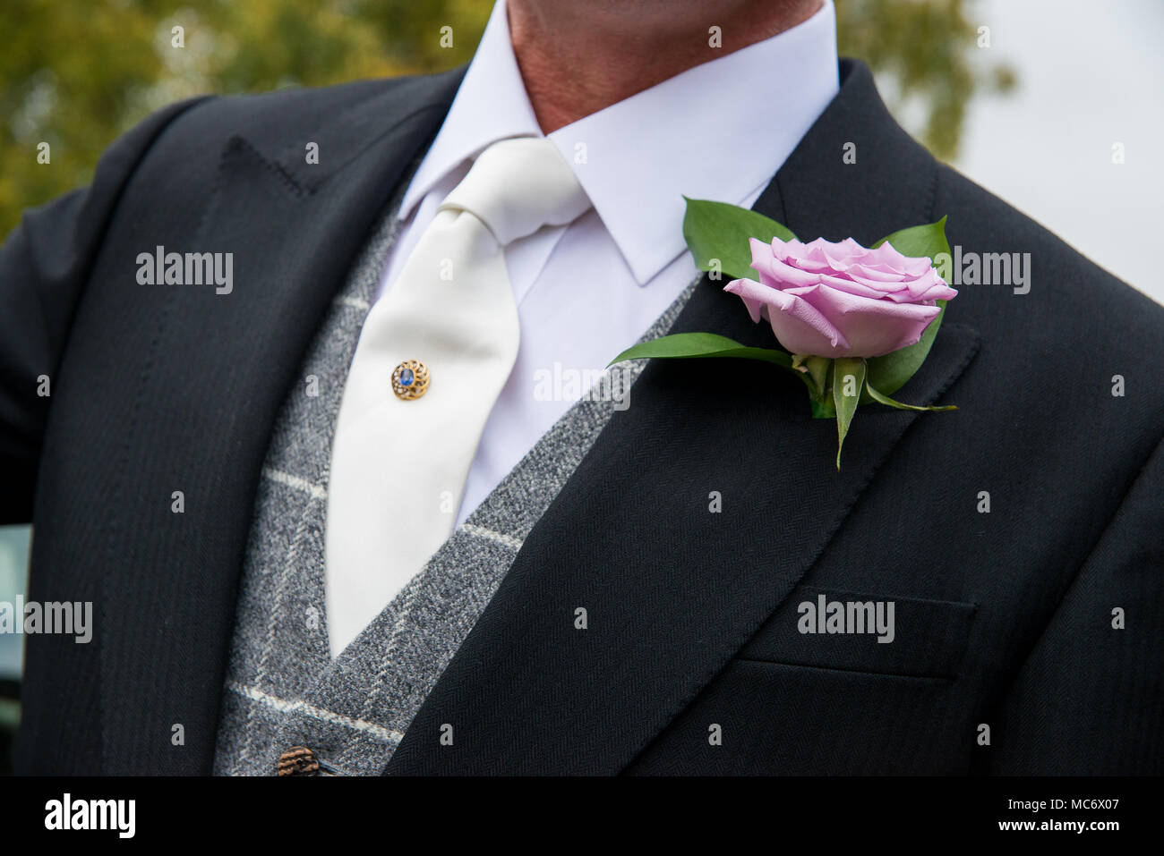 Wedding buttonhole of a single pink old fashioned rose against a dark suit with grey large check waistcoat, white tie and shirt, with jewelled tie pin - Stock Image