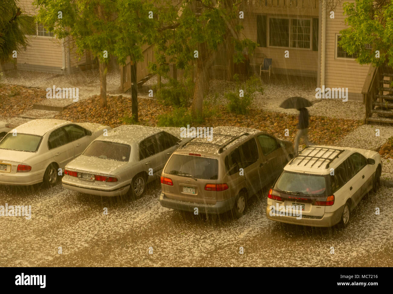 Hailstorm on parked cars in lot of suburban apartment building, Aurora Colorado US. See vertical streaks-(hail falling), white hailstones on ground. - Stock Image