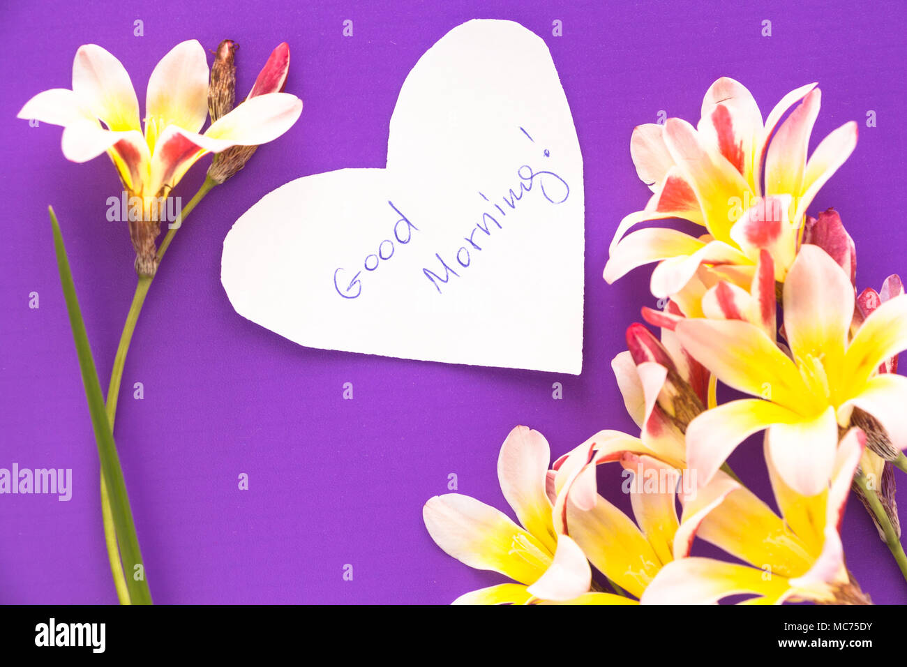 Note in shape of heart with words 'Good Morning!' with flowers on purple surface. - Stock Image