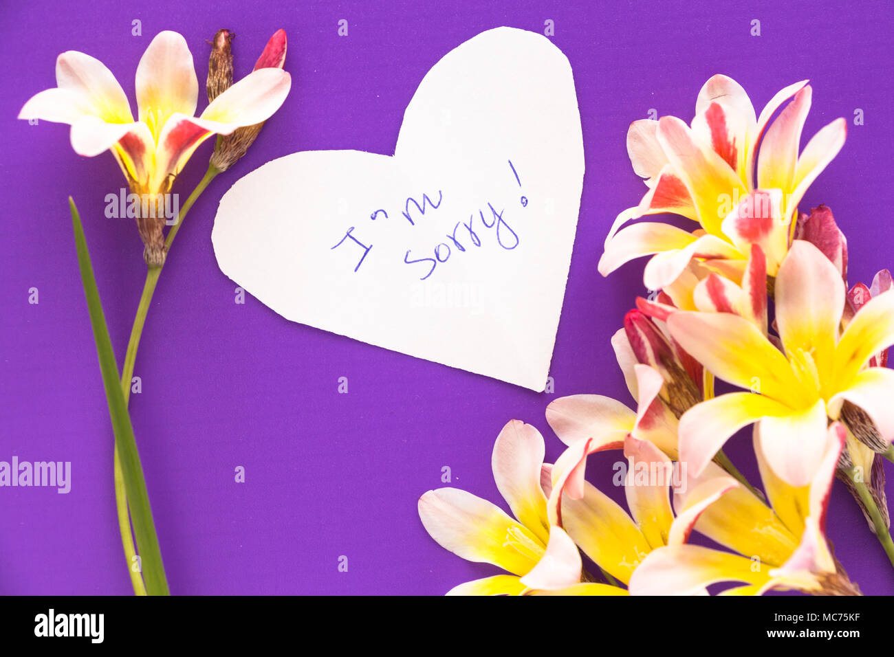 Sorry Flowers Stock Photos Sorry Flowers Stock Images Alamy