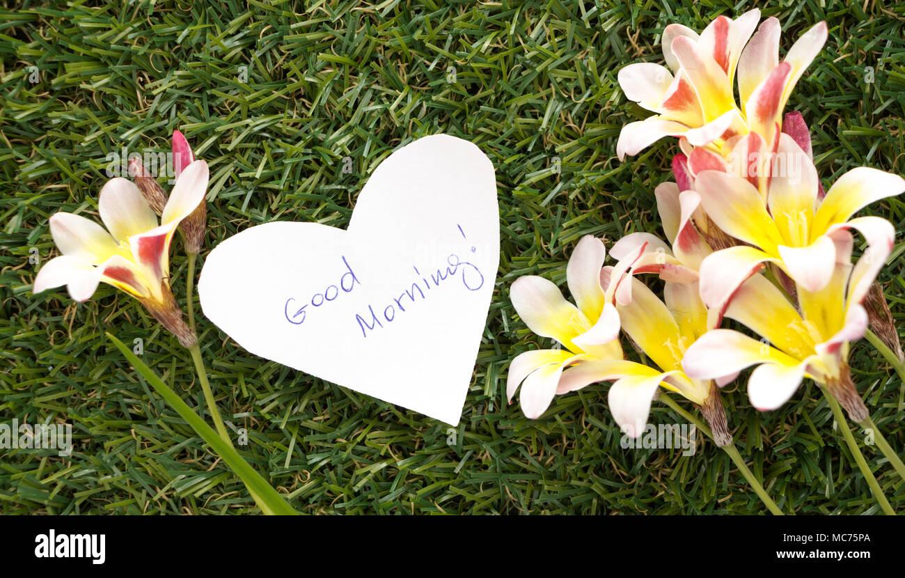 Words Good Morning Spring Flowers Stock Photos Words Good Morning