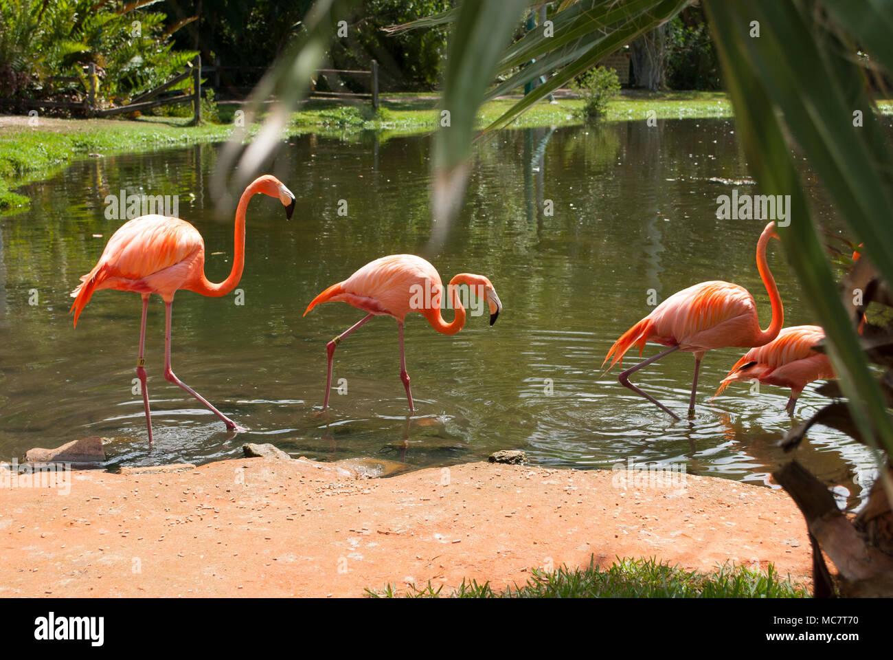 pink flamingos stream deutsch