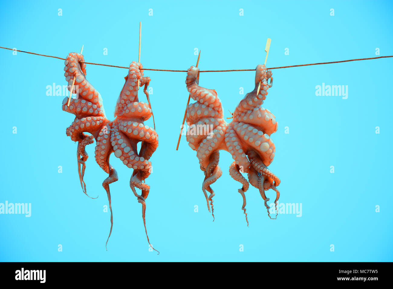 Octopus hanging on a line to dry in the sun. Rhodes, Greece - Stock Image
