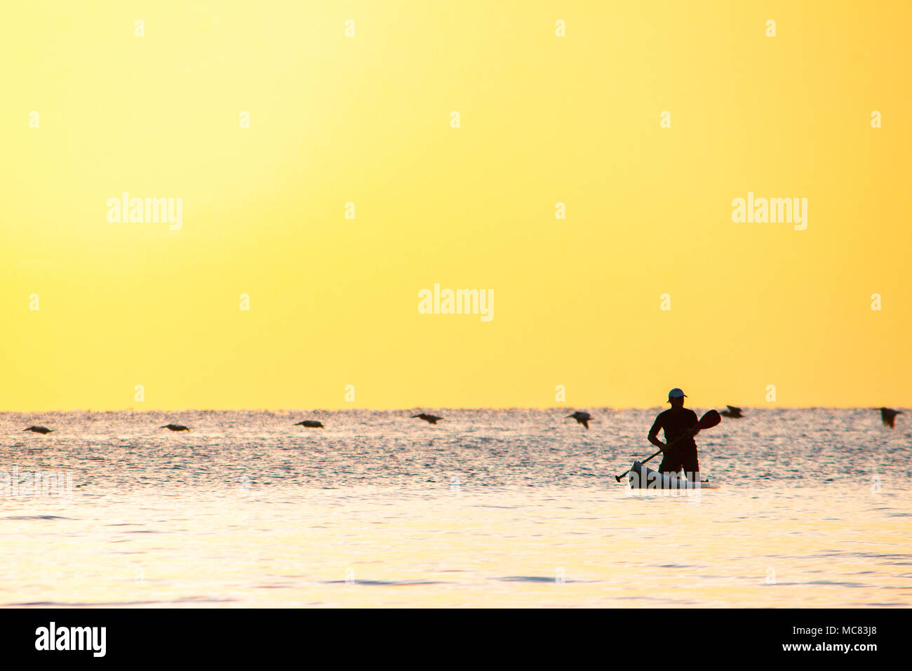 dd4f1b39ee3 A stand up paddle boarder is silhouetted against the colorful early morning  sunrise over Hollywood beach