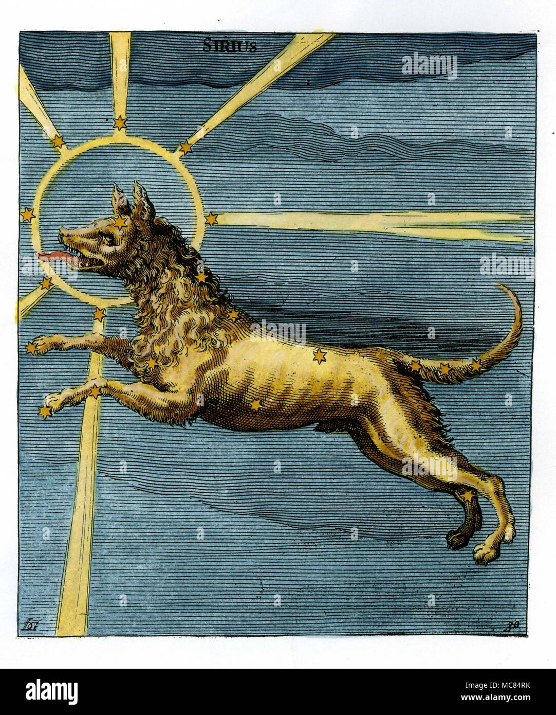 Image of the constellation Canis Major - though the print is itself marked [at the top] with the name Sirius, which denotes the major star in the asterism.  Seventeen century hand-colourd engraving, based on the  ninth century Aratus illumination in Leiden.  Aratus was born about 315 BC, in Soli, and was author of the early star-book  'Phaenomena'. - Stock Image