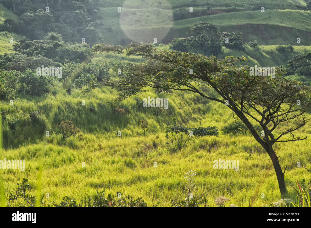Tree inserted in green valley. - Stock Image
