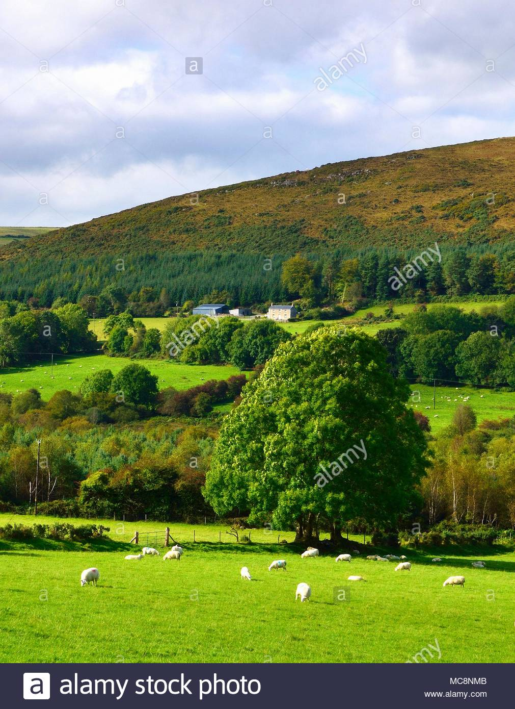 A Late Summer View Of The Lush Landscape Of County Wicklow