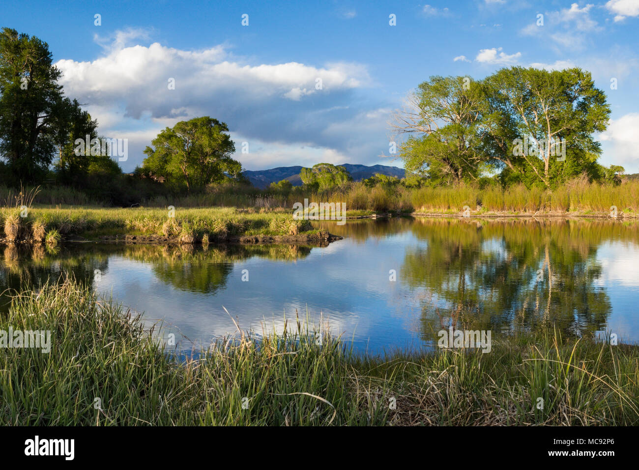 A peaceful beaver pond reflects the serene landscape in central Colorado - Stock Image