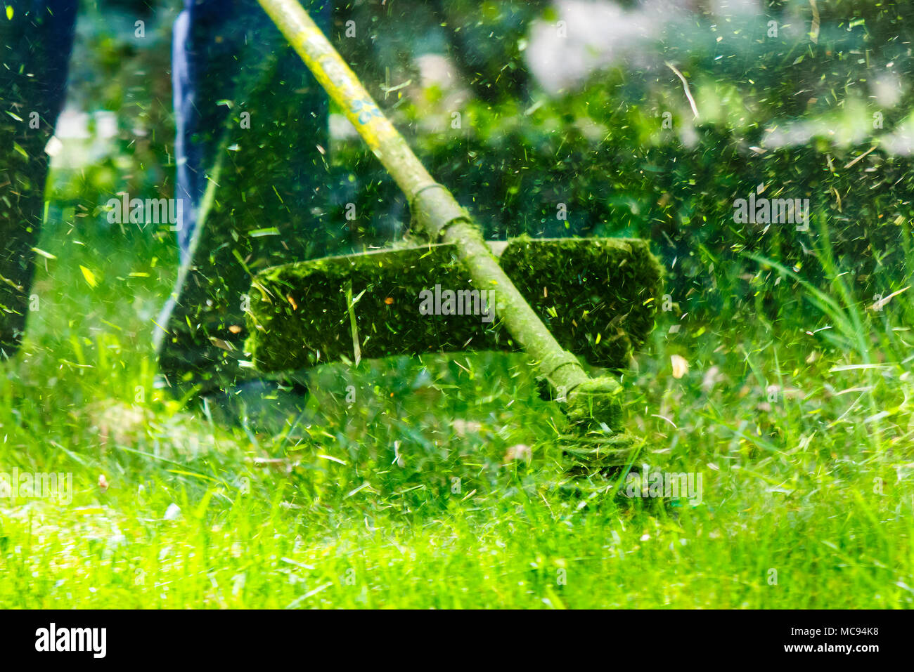 grass cutting in the garden with trimmer. lovely nature background - Stock Image