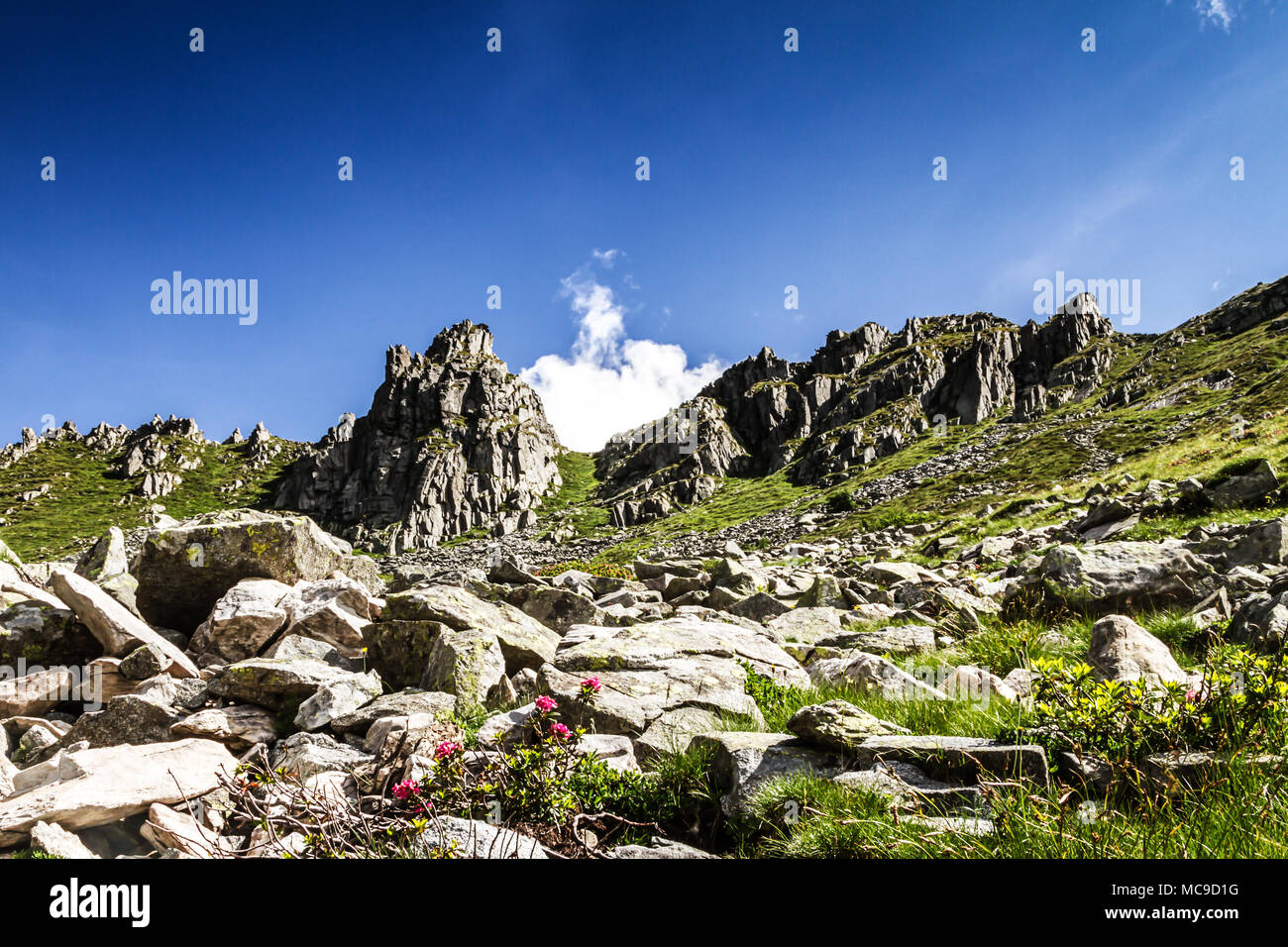 Mount Gaver in summer time. Pass of the cow from Tito Secchi refuge in Valsabbia, Brescia, Italy. - Stock Image