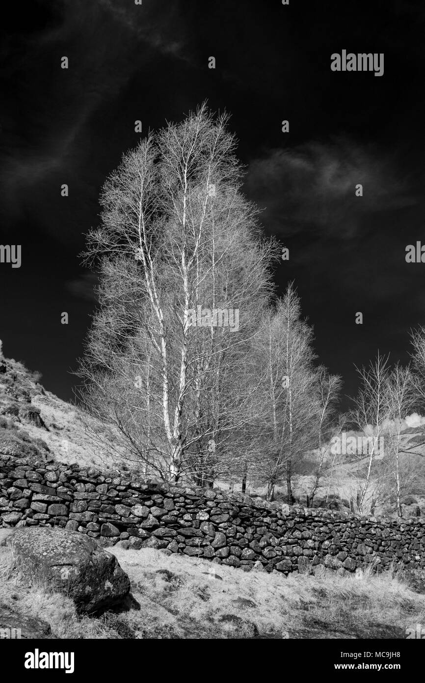 Infrared trees watendlath cumbria stock image