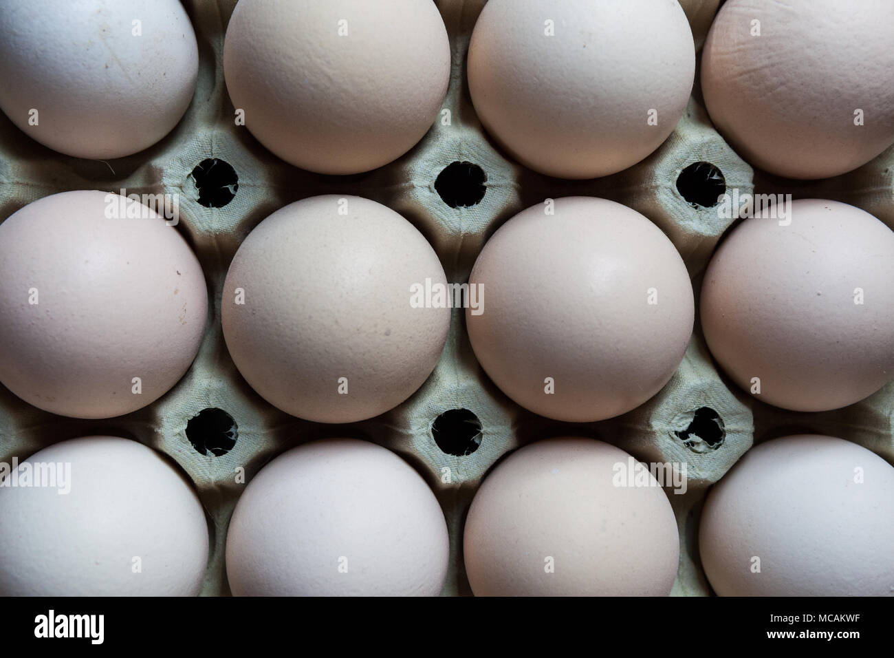 Eggs in carton cell - Stock Image