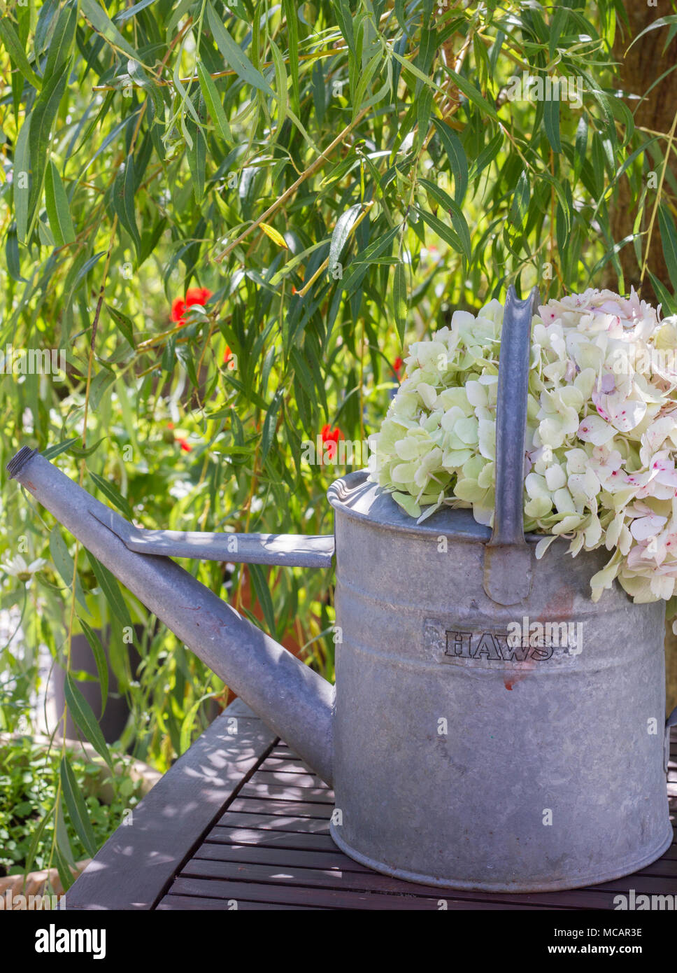 Hydrangea Tree Stock Photos & Hydrangea Tree Stock Images - Alamy