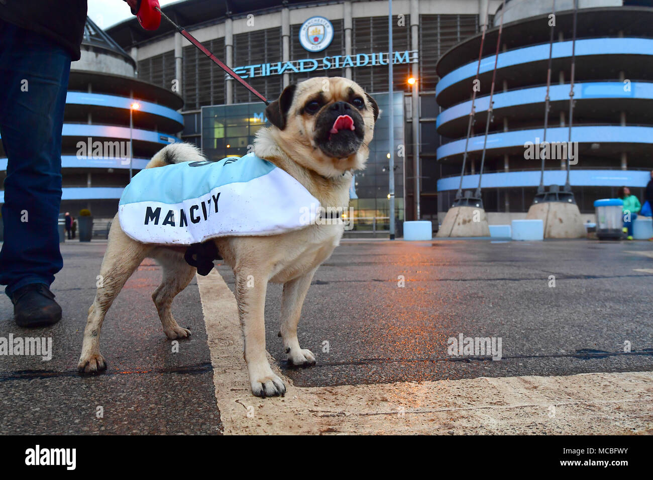 A Dog Called Balotelli Celebrates As Manchester City Win The