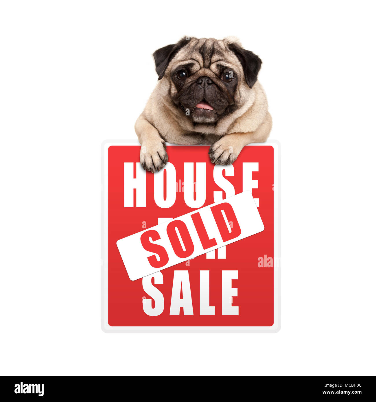 cute smiling pug puppy dog hanging with paws on red house sold sign, isolated on white background Stock Photo