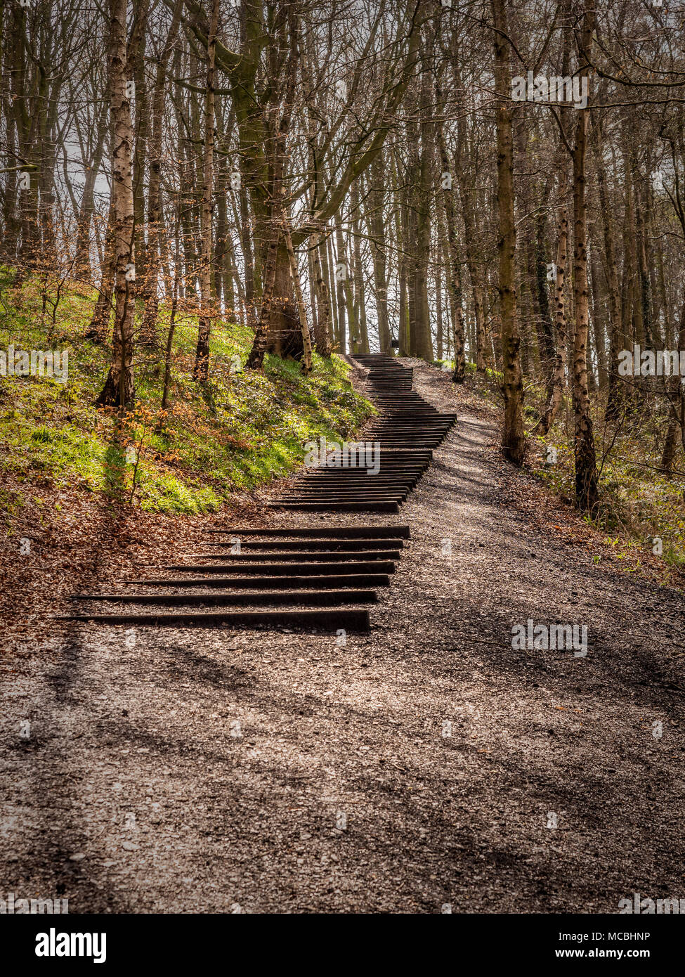 Seventy-one Steps installation by David Nash at the Yorkshire Sculpture Park, UK. - Stock Image