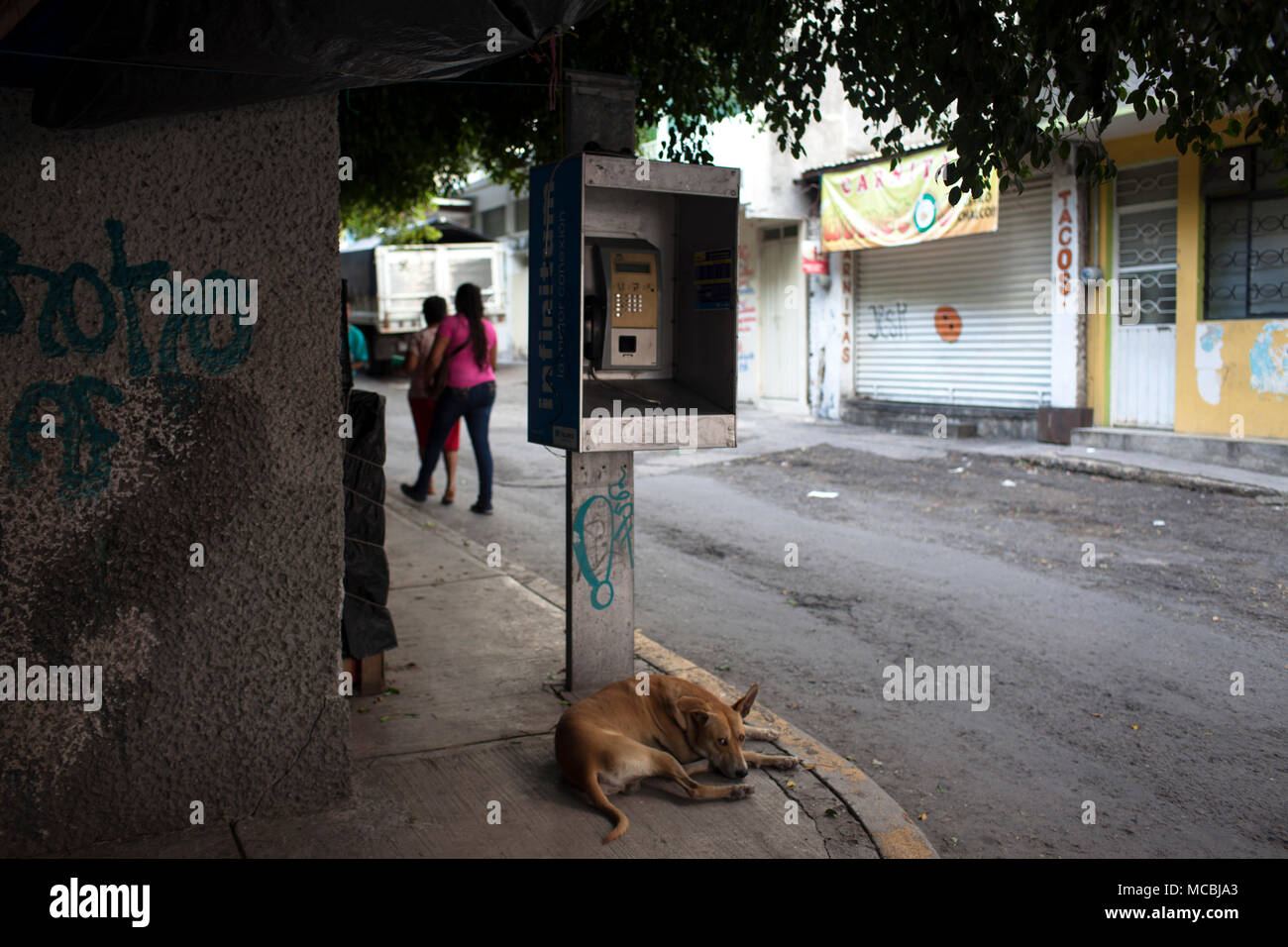 A dog in downtown Chilpancingo, Guerrero, Mexico on Saturday, July 25, 2015. The State of Guerrero has experienced a lot of violence, including the disappearance of 43 students last fall. - Stock Image
