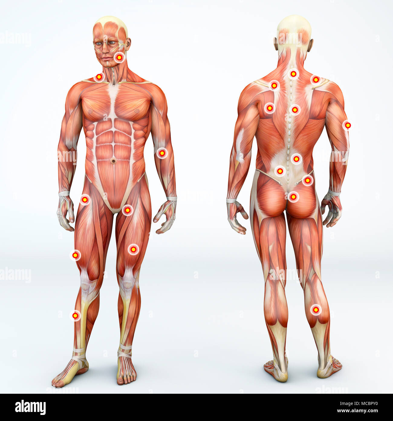 Front and back view of a man and trigger points. Anatomy muscle man ...