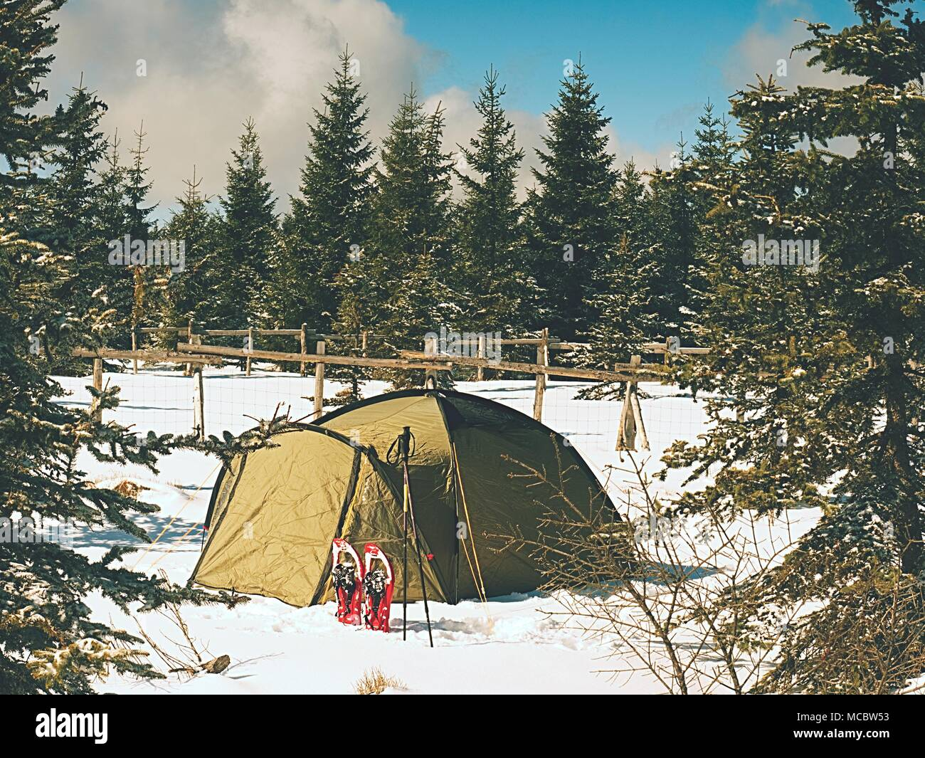 Camping during winter hiking in mountains. Green touristic tent under spruces. Stock Photo