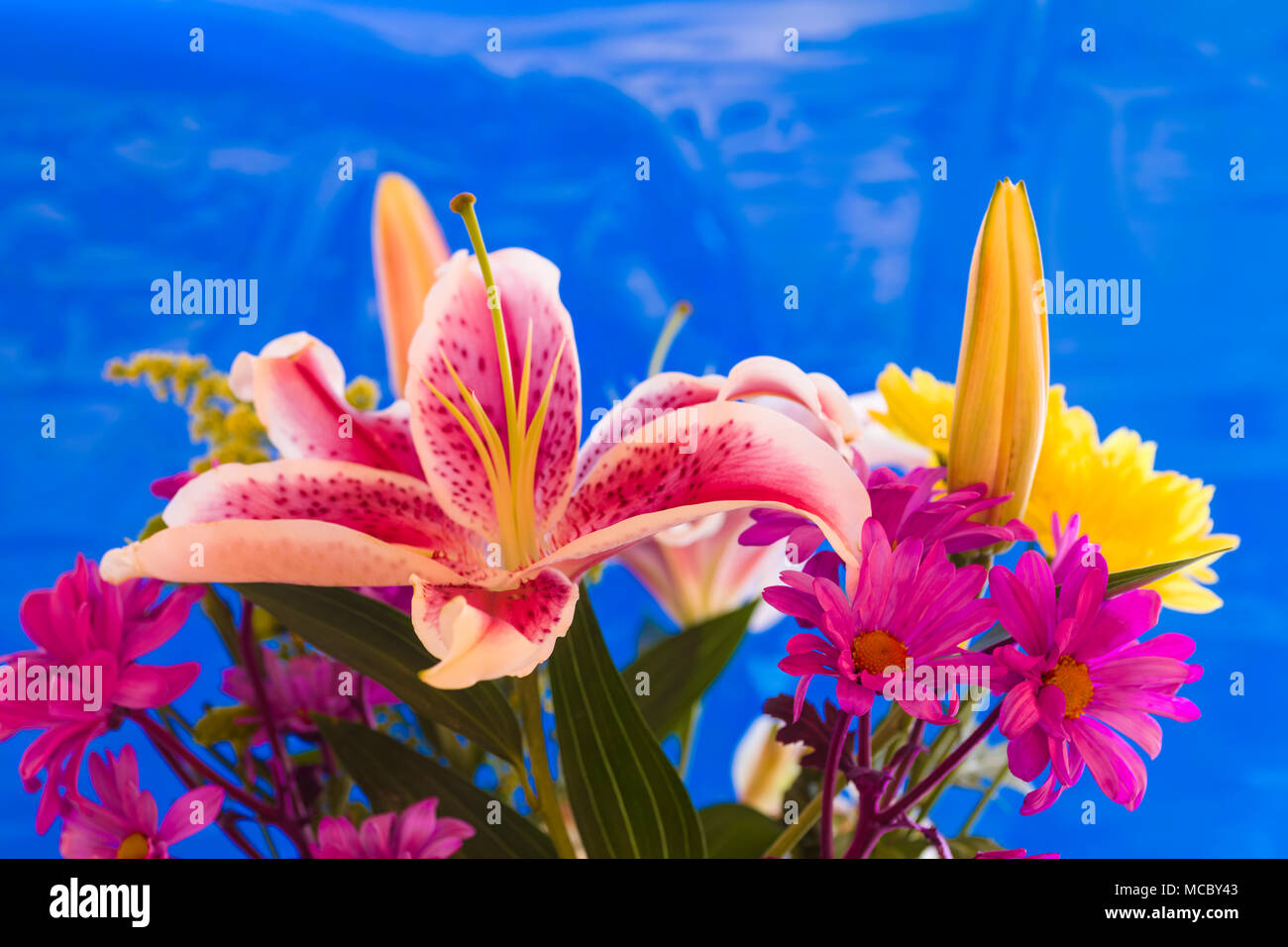 Floral arrangement with red and white Stargazer Lily and purpleand yellow mums - Stock Image