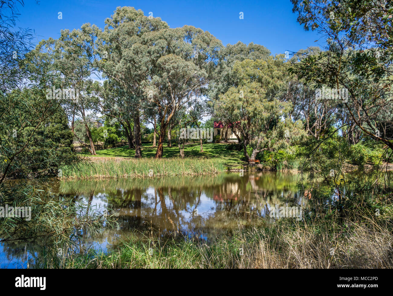 quaint little heritage church amongst the eucalypt trees and billabongs of Orange Botanic Gardens, Central West New South Wales, Australia - Stock Image