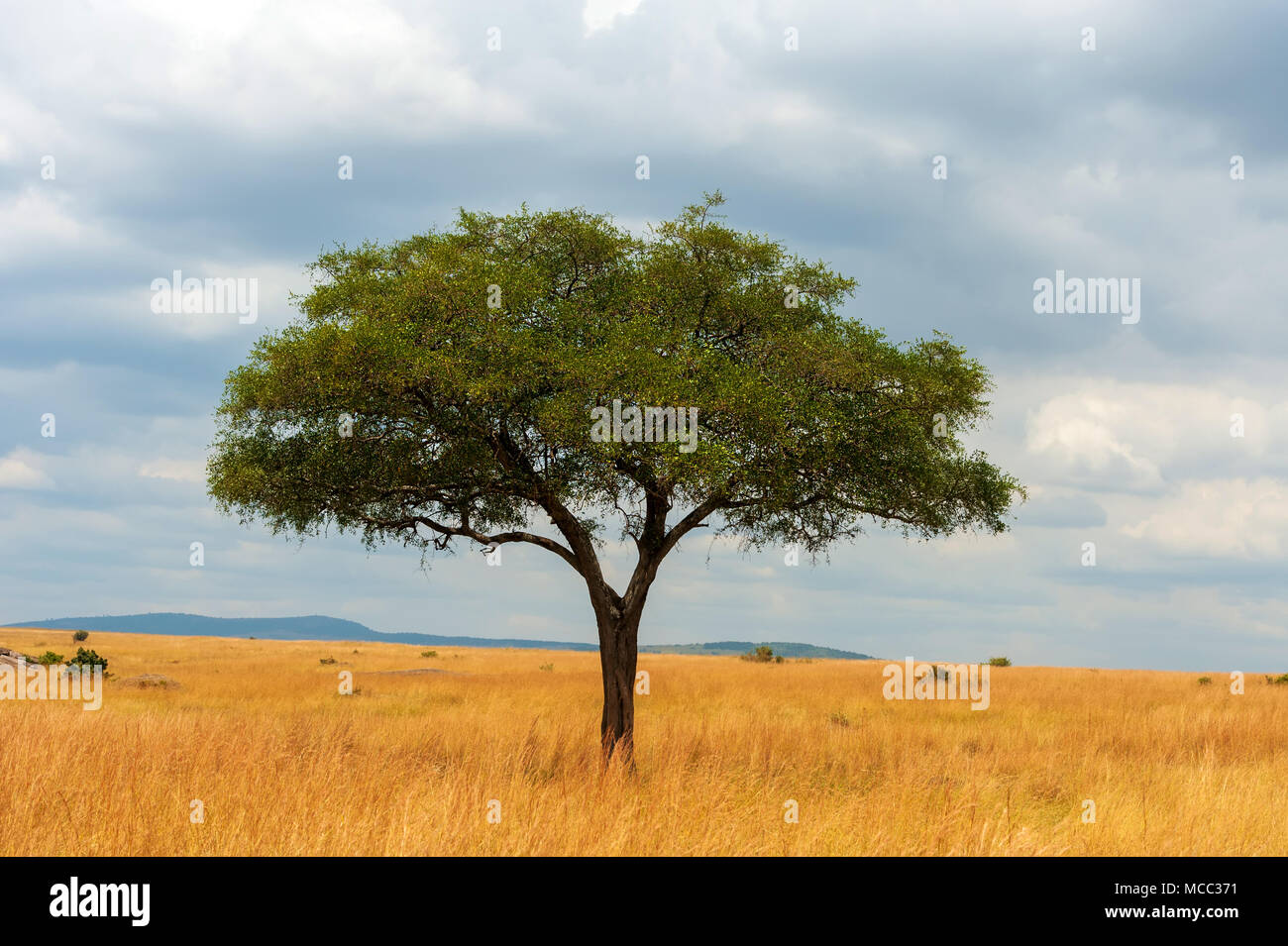 Beautiful landscape with nobody tree in Africa Stock Photo