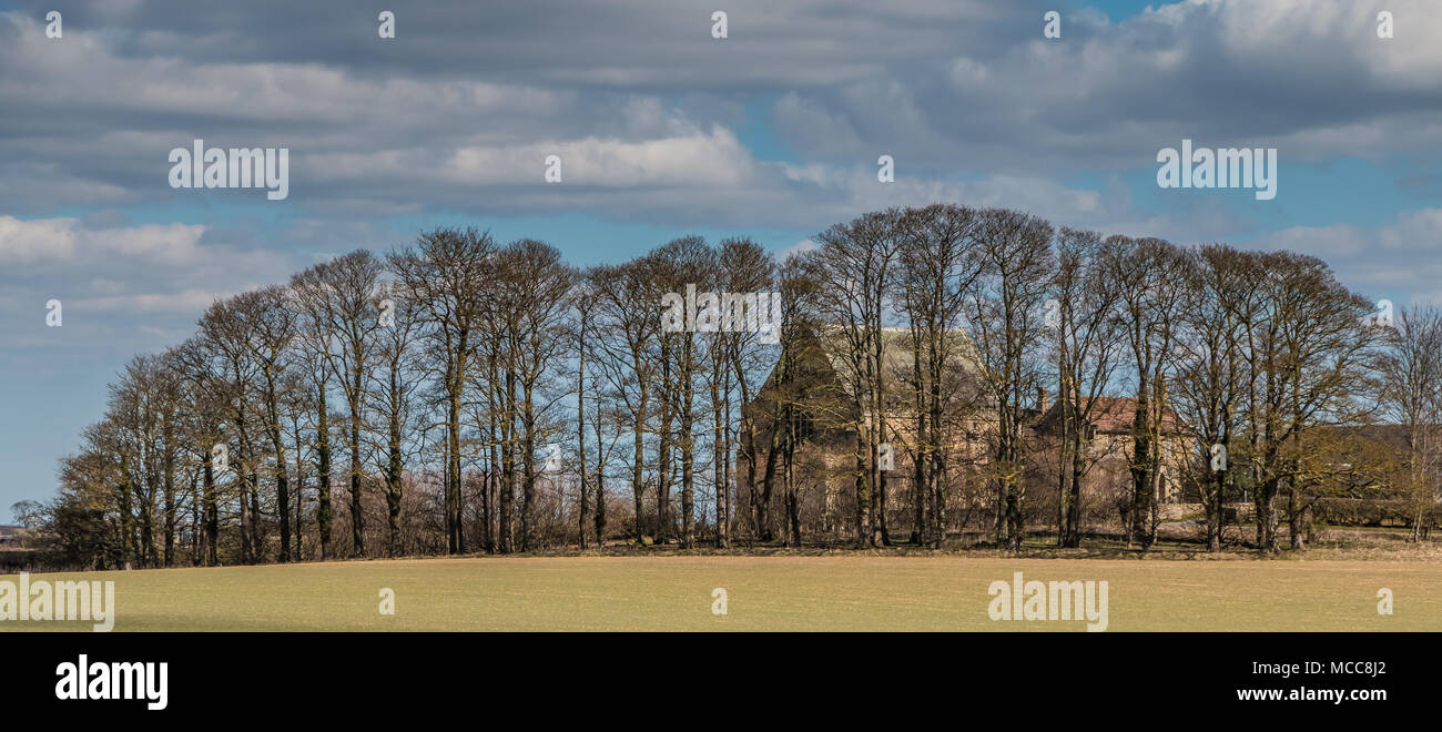 St Mary's Catholic Church, Wycliffe, Teesdale, early spring, behind a protective screen of sycamore trees - Stock Image