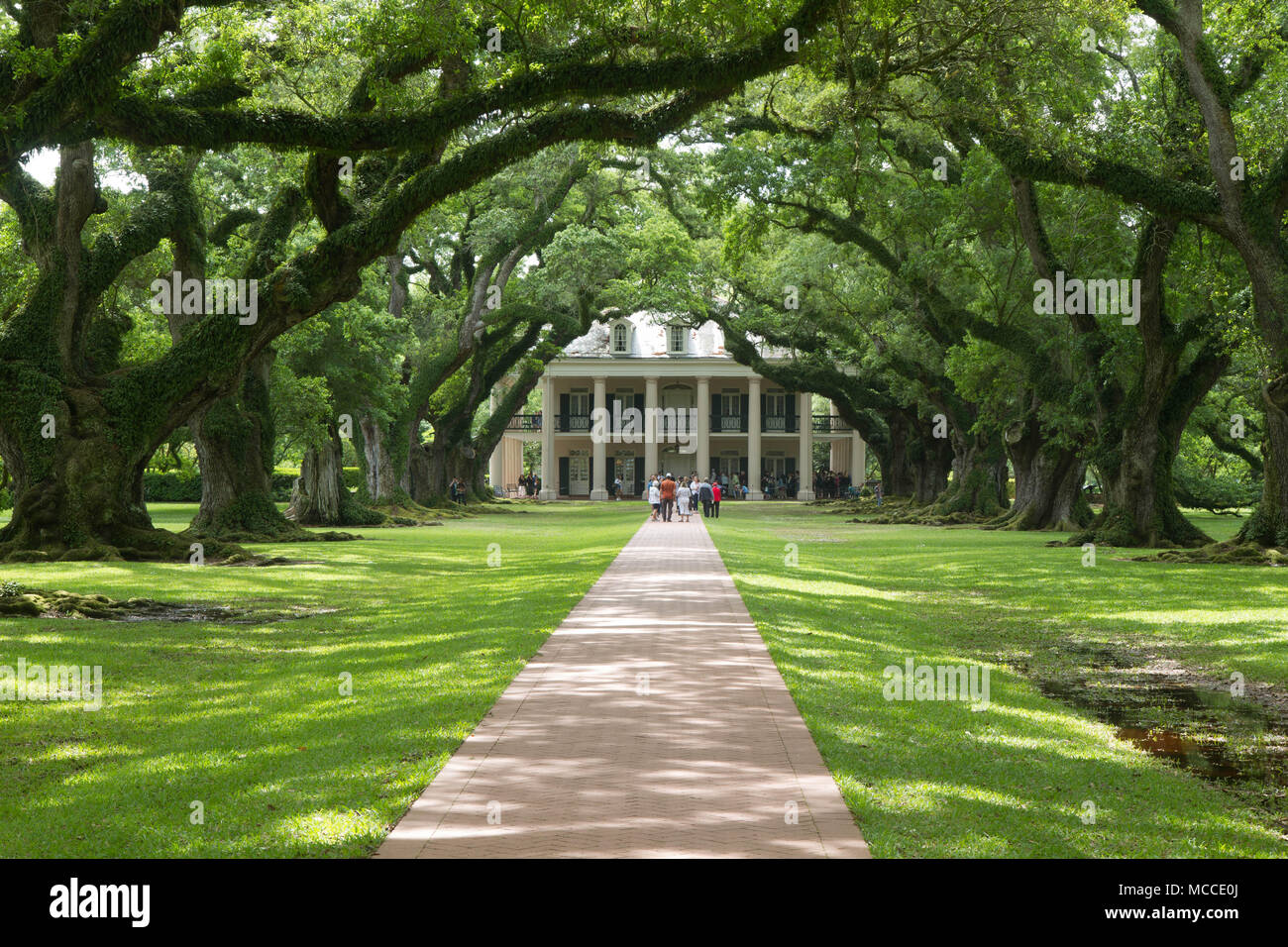 Oak Alley Plantation, Vacherie, St. James Parish, Louisiana, United States.  Color Landscape Photo Of Plantation House At End Of Tunnel Of Oak Trees  Stock ...