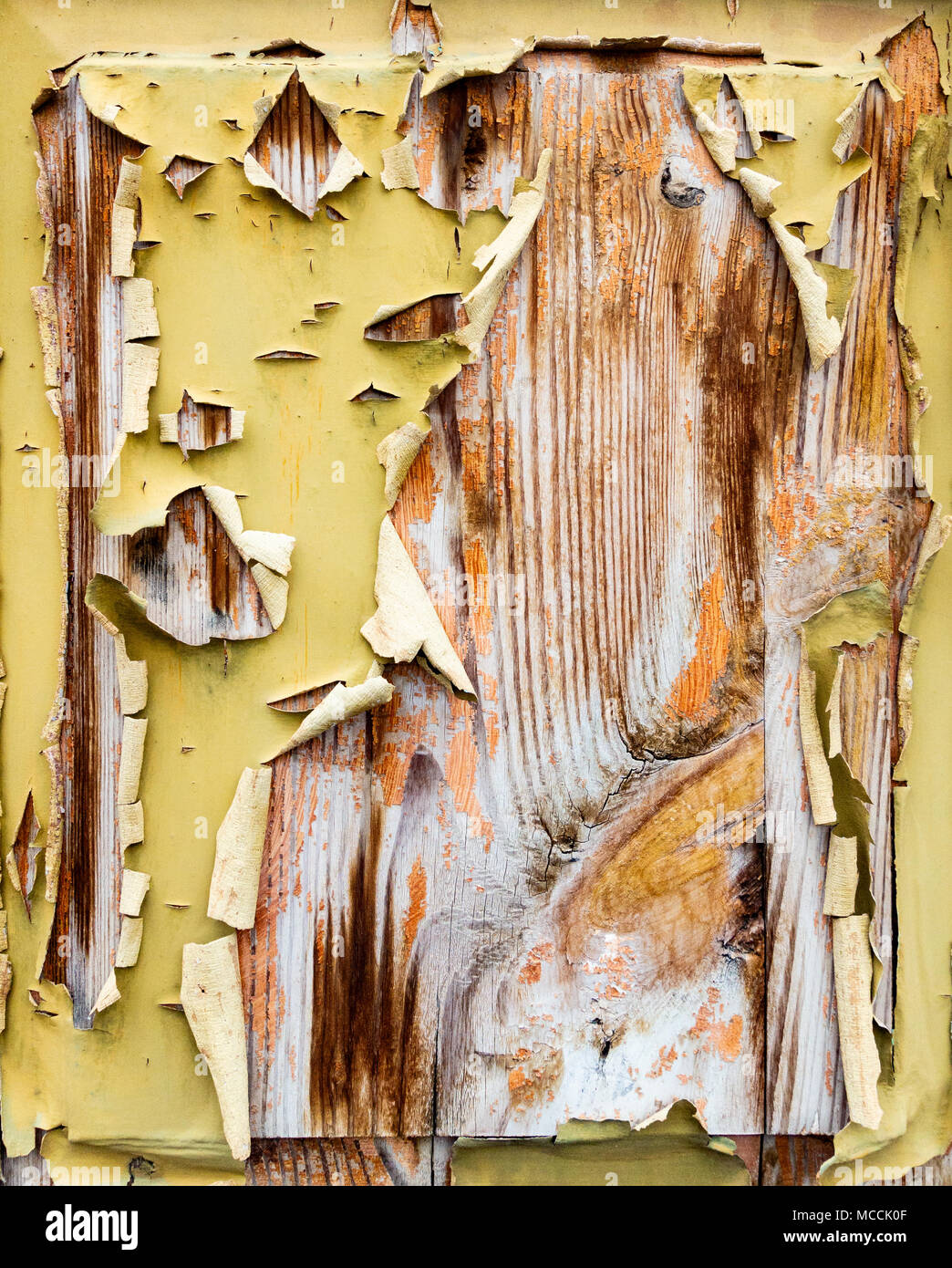 Flakingpeeling paint on old weathered wooden door Suitable fore