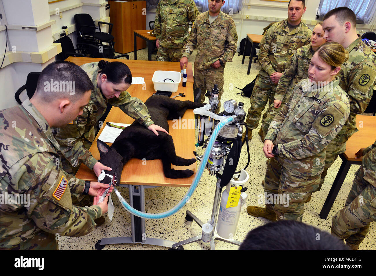 U.S. Army Sgt. Manuel Ivan Cervantes, animal care NCO, USARMY MEDCOM PH-E (left) and Sgt. Holly J. Schmidt assigned 64th Medical Detachment (USS) Baumholder Germany( center) , use Hero' the dummy training dog, to demonstrate how to properly intubate a patient who is undergoing general anesthesia during training Public Health Activity Italy Animal Care Specialists at Caserma Pluto, Longare, Vicenza, 12 Feb. 2018. Once the animal is intubated their heart and respiratory rate, blood oxygenation rate and carbon dioxide levels are monitored to make sure they're not too excessively sedated during su - Stock Image