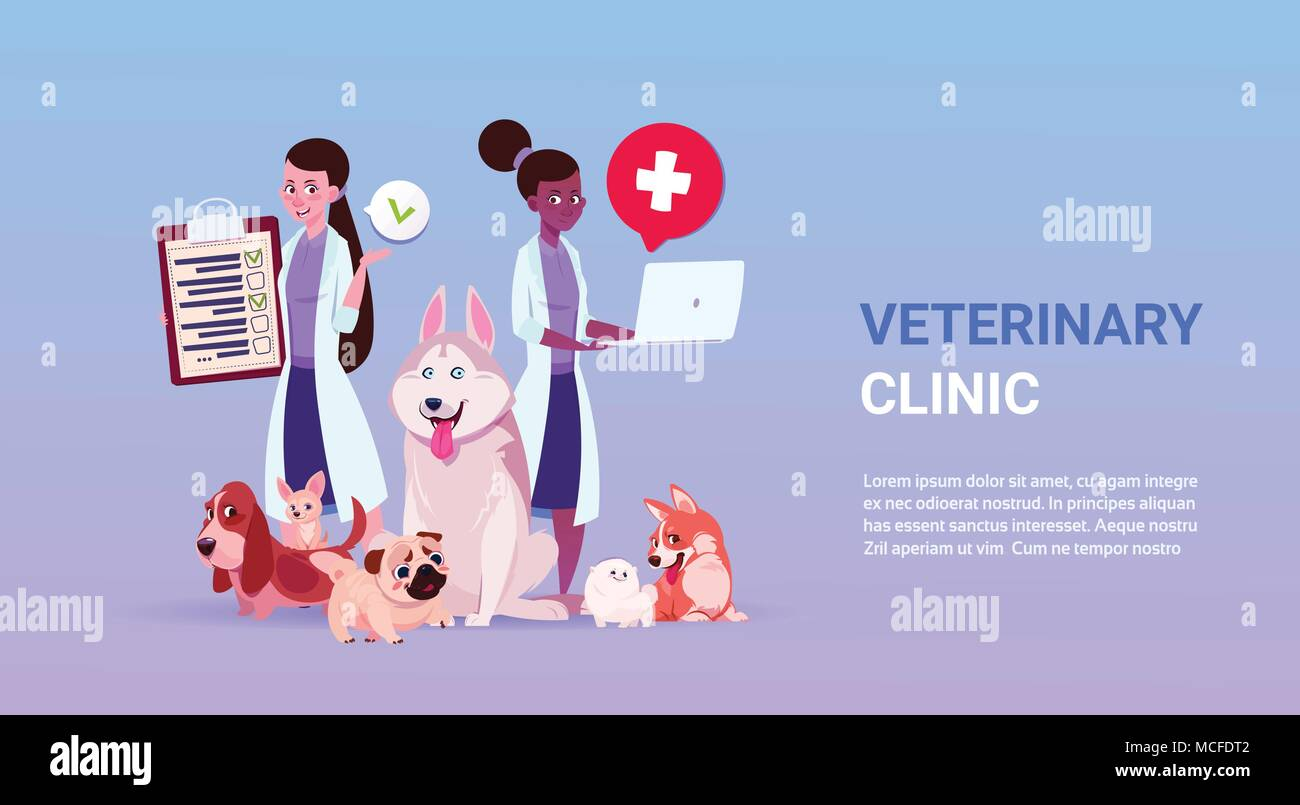 Veterinary Clinic Poster With Female Doctors Ver And Group Of Dogs Over Template Background Flat Vector Illustration - Stock Vector