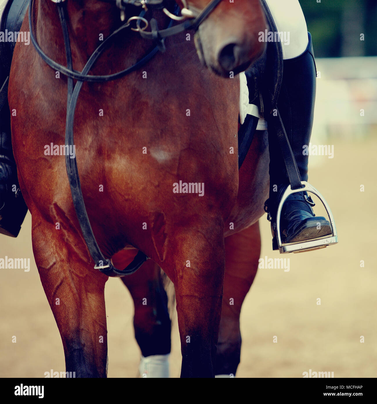 Foot of the athlete in a stirrup astride a horse - Stock Image