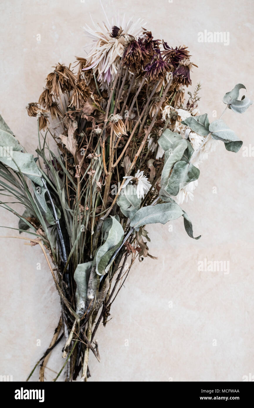 high angle view of dead decaying flowers - Stock Image