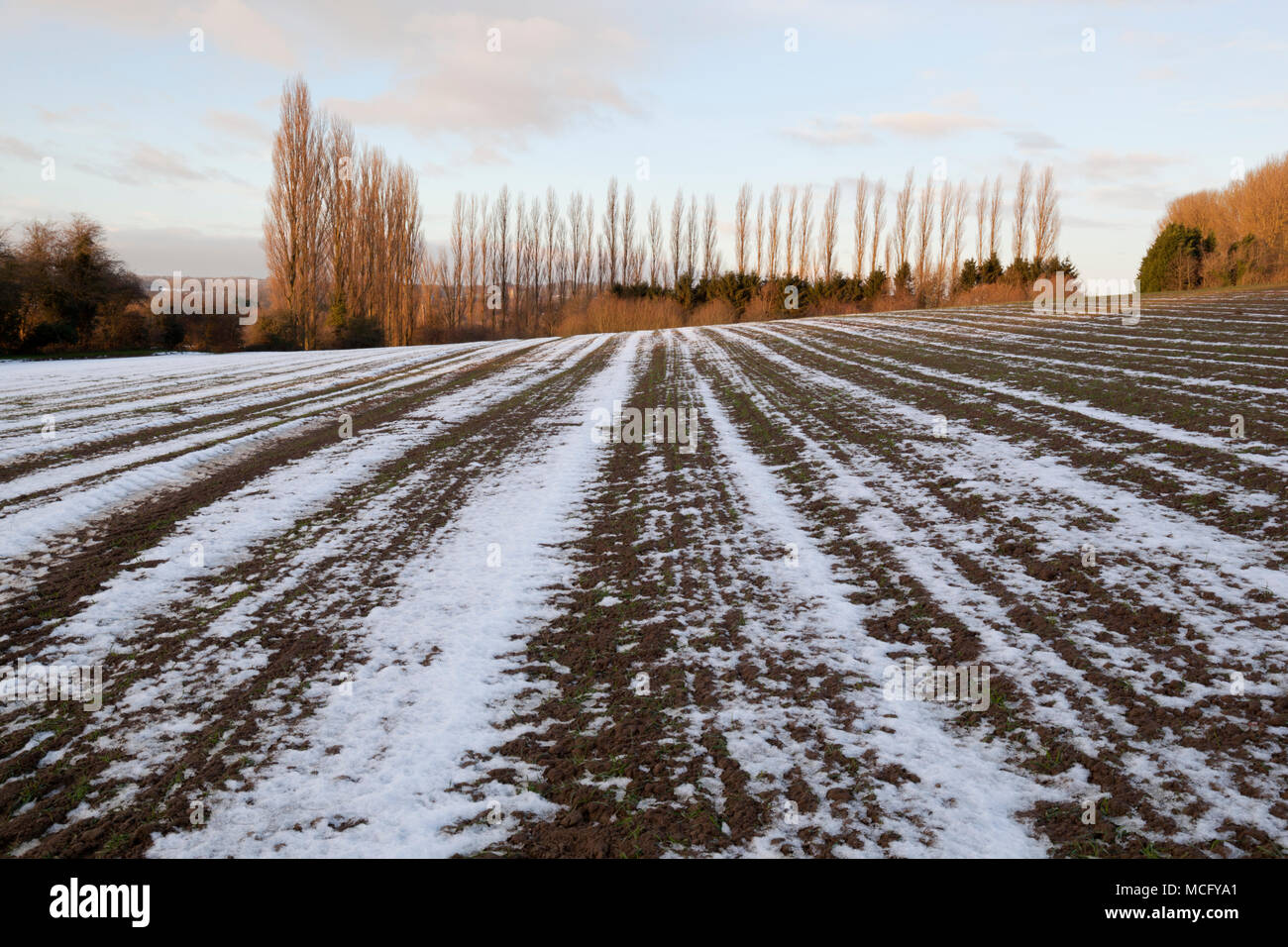 Melting snow in furrows in ploughed field with bare poplar trees in distance, Ebrington, Cotswolds, Gloucestershire, England, United Kingdom, Europe - Stock Image