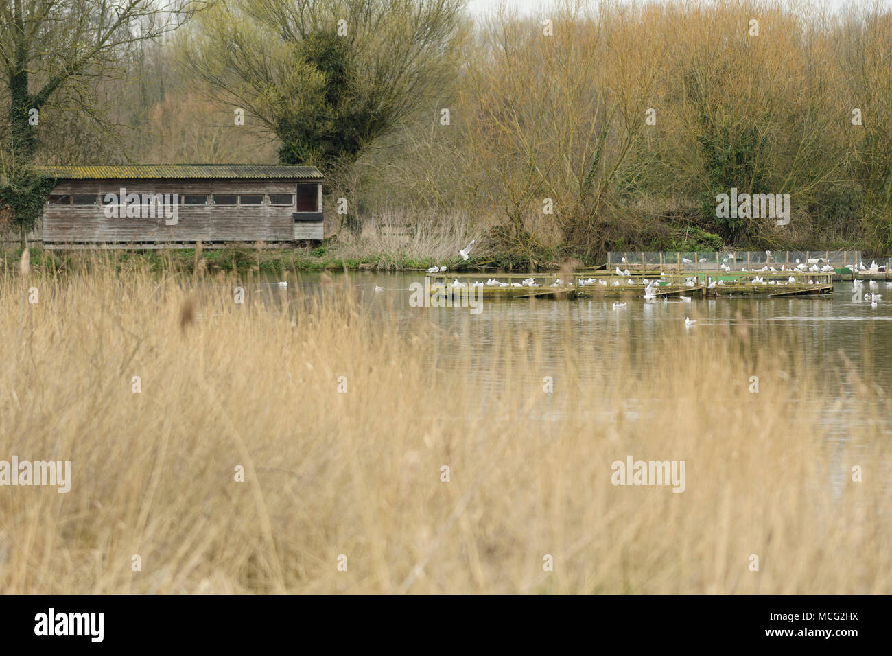 Birdwatching hide in Rye Meads nature reserve, Hoddesdon, Engalnd - Stock Image